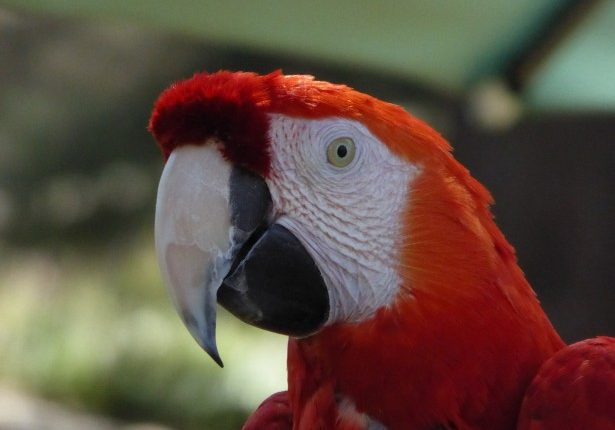 Un papagal vorbitor duce o discuție foarte amuzanta
